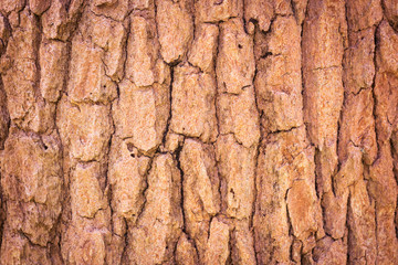 Bark Tree texture background