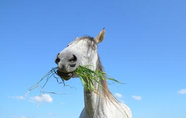 Lustige Pferdeperspektive