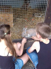 Boy and girl feed rabbit