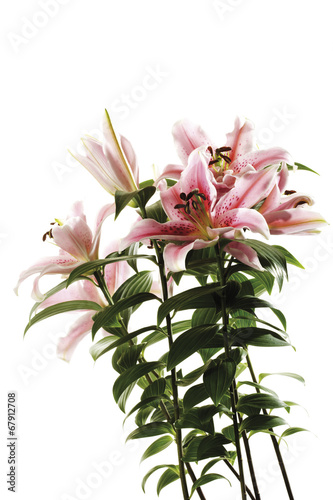 canvas print picture Tiger -Lilie, Lilium lancifolium , close-up