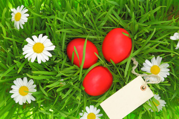 Green grass with red Easter eggs and blank tag