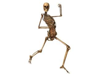 female skeleton with detailed anatomy organs