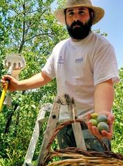 Joven agricultor mostrando la fruta que ha recolectado