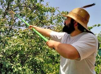 Joven agricultor recogiendo fruta de un árbol