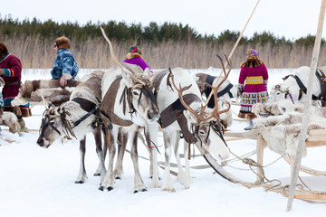 Herders and their reindeer during the trip