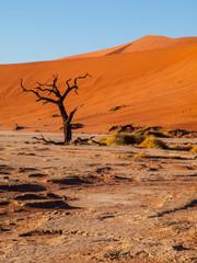 Dead acacia tree in Deadvlei