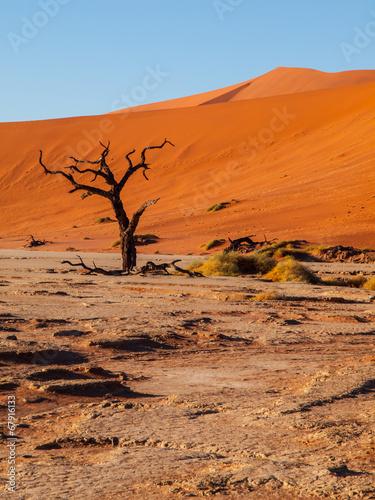 Staande foto Marokko Dead acacia tree in Deadvlei