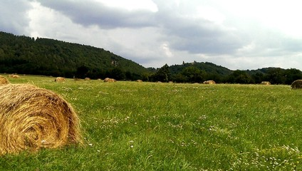 Haybales on the meadow