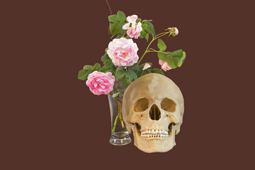Roses and skull - life and death