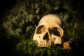 still life skull in the garden
