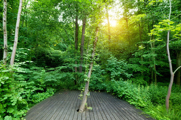 Wooden floor in a green forest. Spa, welness, nature