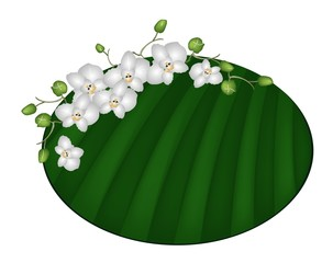 Beautiful Moon Orchids on Green Banana Leaf