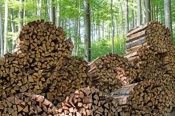 Brennholz im Wald
