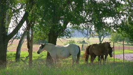 木陰と馬3