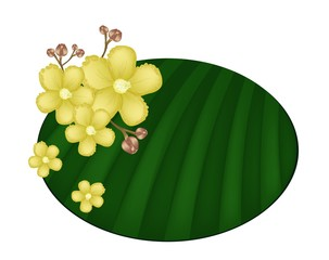 Beautiful Yellow Simpor Flowers on Banana Leaf