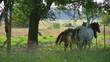木陰と馬6