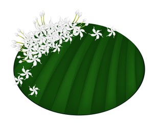 Fresh Cape Jasmine on Green Banana Leaf