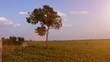 夕陽と馬2