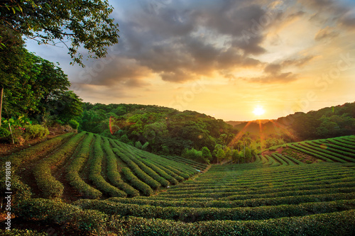 Foto op Canvas Beijing tea plantation landscape sunset