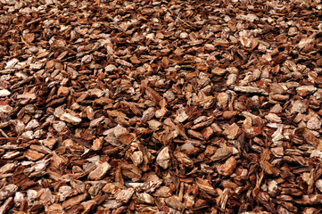 Cortex or wood chip texture