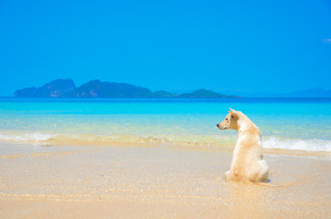 a dog waiting on the beach