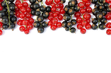 black and red currant on a white background