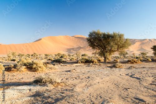 Désert du Namib en Namibie