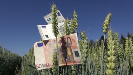 euro banknotes on wheat field ears – business concept