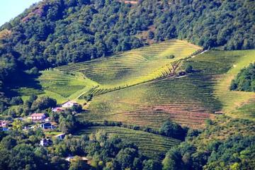 Vignes d'Ispoure, Pays Basque