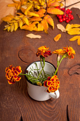 Autumn Tagetes flowers