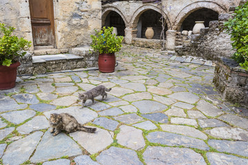 Cats in the monastery