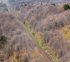 Pair of straight train tracks in forest.