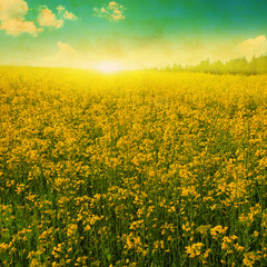 Field of spring flowers, blue sky with clouds and sun in grunge