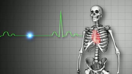 人間の骨格と心臓のイメージ