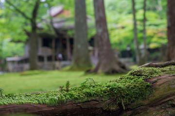 京都三千院の庭園