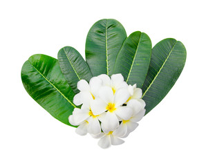 plumeria blossom and leaves