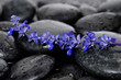still life with pebbles and a bunch of lavender flower