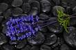 bunch of lavender flower and wet black stones