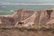 mountain goat on a hillside