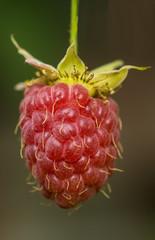 Berry raspberry