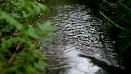 The wood stream to a grass flows away 2.