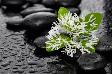 Zen stones and white flower with leaf on wet background
