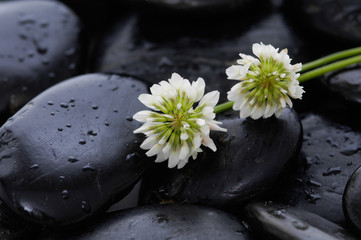 white flower and black stones