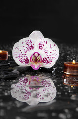 still life with orchid and candle on black stones reflection