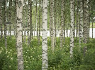 Birkenwald & See