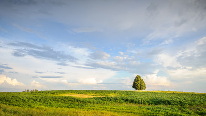 Lonely tree at boundless sunny fields
