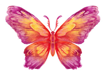 Бабочка акварельная на белом, вариант 4.