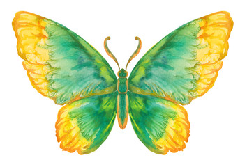 Бабочка акварельная на белом, вариант 5.