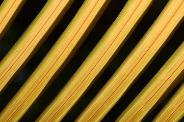 yellow coconut leaf in pattern