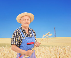 Mature farmer holding wheat straws in a field